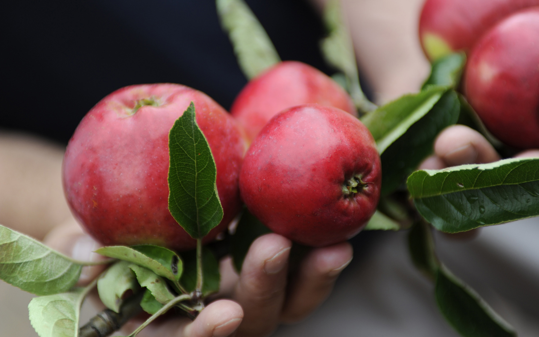Apfel-Geschenke