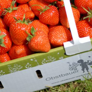 Erdbeer-Geschenke